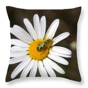 A Beattle On A Daisy Throw Pillow