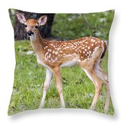 A Beautiful Fawn Throw Pillow