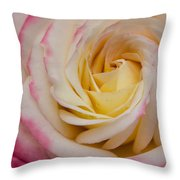A Beautiful Pink Rose In Summertime Throw Pillow