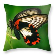 A Beauty Throw Pillow