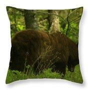 A Big Bruin Throw Pillow