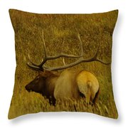 A Big Bull Elk Throw Pillow