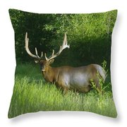 A Big Wide Rack  Throw Pillow by Jeff Swan