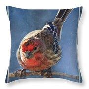 A Blue Morning Housefinch Throw Pillow