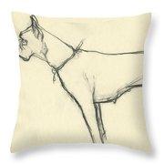 A Boxer Dog Throw Pillow
