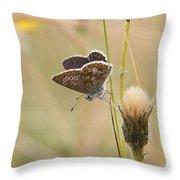 A Brown Argus On Stem Throw Pillow