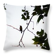A Brown Thrasher Sings In Sycamore Tree Throw Pillow