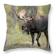 A Bull Moose Named Gaston Throw Pillow