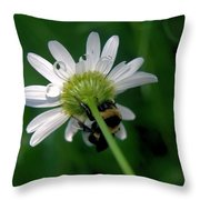 A Bumble On The Wrong Side Throw Pillow