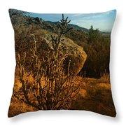 A Cactus In The Sandia Mountains Throw Pillow