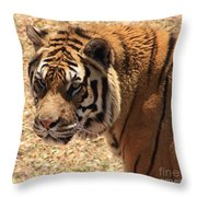 A Classical Beauty Throw Pillow