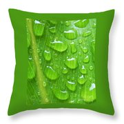 A Cleansing Morning Rain Throw Pillow