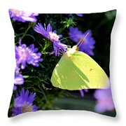 A Clouded Sulphur On Lavender Mums Throw Pillow