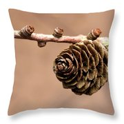 A Conifer Cone On A Tree Branch Throw Pillow
