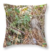 A Coopers Hawk Hidding Throw Pillow