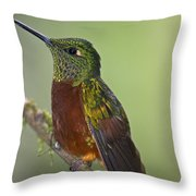 A Coronet Without A Coronet.. Throw Pillow