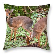 A Couple Of Dik-dik Antelopes In Tanzania. Africa Throw Pillow