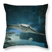 A Crownose Ray Rhinoptera Bonasus Throw Pillow