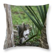 A Curious Squirrel Throw Pillow