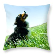 A Cute Dog On The Field Throw Pillow