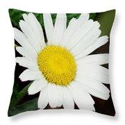 A Daisy If You-do Throw Pillow