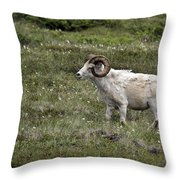 A Dall Ram's Curl Throw Pillow