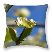 A Dogwood Blossom Throw Pillow