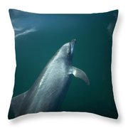 A Dolphin Swims In The Bay Throw Pillow