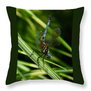A Dragonfly Throw Pillow