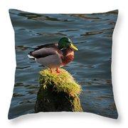 A Drake Mallard Perches On A Piling Throw Pillow