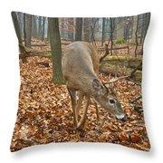 A Eight Point Buck 1261 Throw Pillow