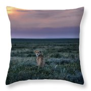 A Female Cheetah, Acinonyx Jubatus Throw Pillow