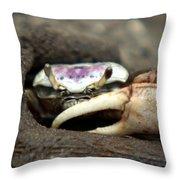 A Fiddler Crab Around Hilton Head Island Throw Pillow