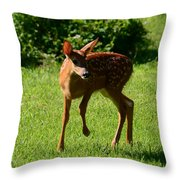 A Fine Little Fawn Throw Pillow by Lori Tambakis