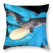 A Fisherman Holds A Dogfish Pup Throw Pillow