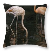 A Flamingo With Its Head Under Water In The Jurong Bird Park Throw Pillow