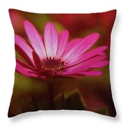 A Flower In A Shadow  Throw Pillow