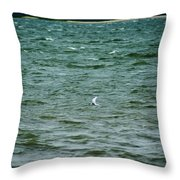 A Forster Tern Fighting The Winds Out At Sea Throw Pillow