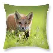 A Fox In The Grass  Montreal, Quebec Throw Pillow