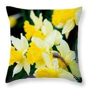 A Gathering Of Daffodils Throw Pillow