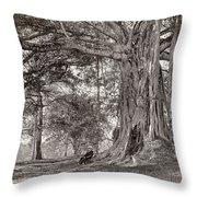 A Gentleman Sitting Beneath A Large Native Tree In British Ceylon Throw Pillow