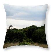 A Giraffe Giraffa Camelopardalis Among Throw Pillow