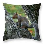 A Gray Squirrel Pose  Throw Pillow
