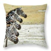 A Grevys Zebra In Ngorongoro Crater Throw Pillow