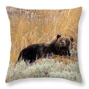 A Grizzily On A Buffalo Carcass Throw Pillow