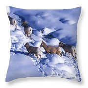 A Group Of Bighorn Sheep Ovis Throw Pillow