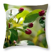 A Group Of Red Tree Flowers Throw Pillow