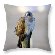 A Hawk On A Fence Post  Throw Pillow