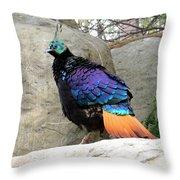 A Himalayan Monal Showing Off Its Beautiful Plumage Throw Pillow