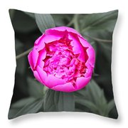 A Hint Of Pink In The Garden Throw Pillow